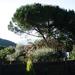 A szomszéd fája mindig zöldebb