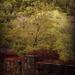 Lillafüredi ősz...