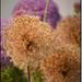 Album - Gardenshow