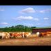 A farm, ahol élünk