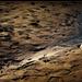 Nyomok a homokban