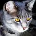 Gyűjtemény - Cicák-Macskák