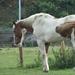 Album - Lovak,  Horse