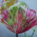 Album - Viragok,  Flowers