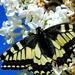 Album - Méhek, lepkék, rovarok