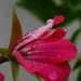 Album - Virágok, növények