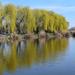 Tavasz a tóparton