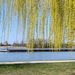 Tavasz a Duna-parton