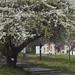 Tavasz Esztergomban 3