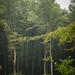 Erdő mélyén 1