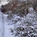 A tél csendje
