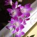 Album - Orchideáim