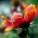 Album - Piros_sárga virágok