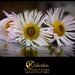 Kaleidos - Art Kiválasztás 2014.11.03.