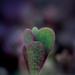 Album - Makro növények