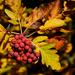 Az ősz meleg színei