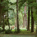 Arborétum 679