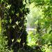Arborétum 305