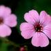 Makró - Virágok