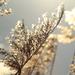 téli nyár