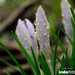 Zoli20 április indafoto 640x960