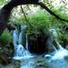 Két vízesés behajló fával