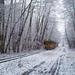Vegyes téli képek 2014-2015 02
