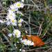 Őszi virágok és egy lehullot falevél