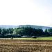 Tájkép vadászles Soproni-hegység free