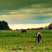 Legelésző lovak Free