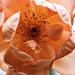 Érdekes októberi rózsa