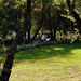 Fakapu :) Fák park