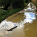 Eső utáni földút és a varjú