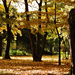 Ősz Park Kert Fák Levelek