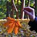 Egy őszi levélke