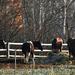 Vacsorázó lovak free