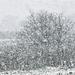 ... miközben sűrűn hullt a hó