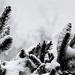 Havazás Tél Fenyő