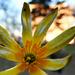 Kis virág egy lakótelepen