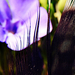 Madártoll a virágok között
