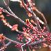 Virágbimbók az aranyló napfényben,viharos szélben