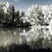 Ibolya tó szerkesztve