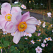 Parki virágok Ősz