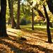 Őszi séta Fák