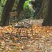 Őszi séta Magányos pad