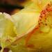 Rózsa Ősz Esőcseppek