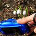 A hóvirág (Galanthus) Werkfotó :)