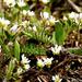 Apró virágok a földön