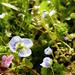Apró virágok
