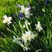 Virágok Tavasz